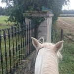 Urlaub in Irland – Pferde inklusive
