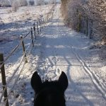 Mit Pferd im Winterwonderland