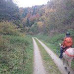 Wanderritt über die Schwäbische Alb – mit Pferd und Muli